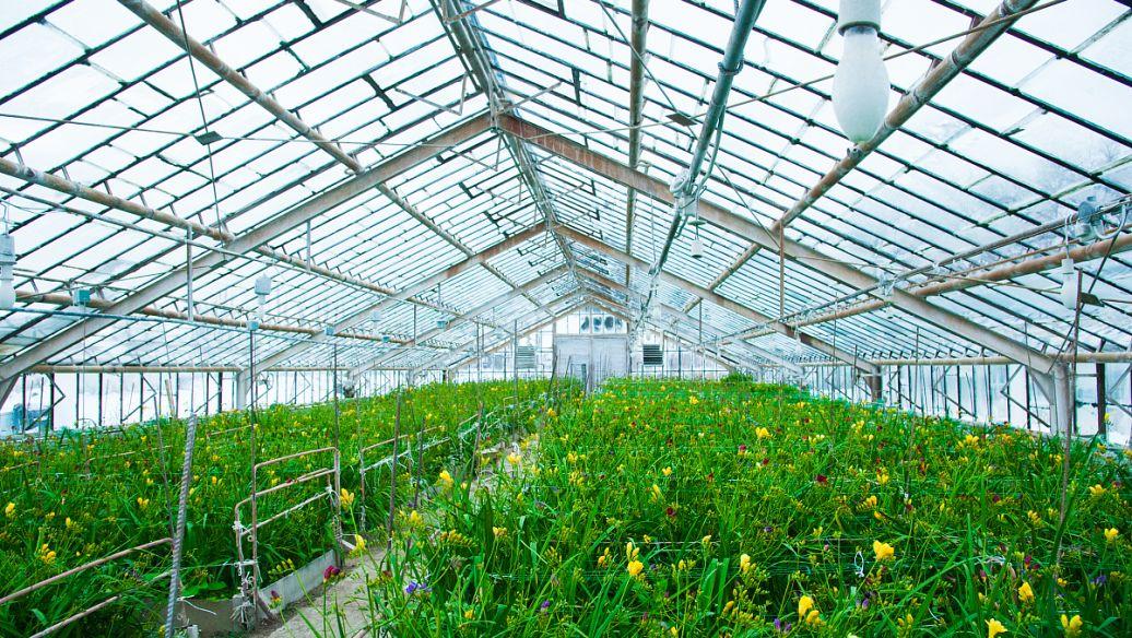 潍坊蔬菜花卉大棚空气能采暖-潍坊空气源工程安装公司