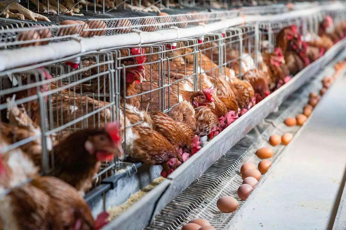 潍坊养鸡场鸡舍供暖使用空气能热泵的优势是什么-潍坊空气源工程安装公司